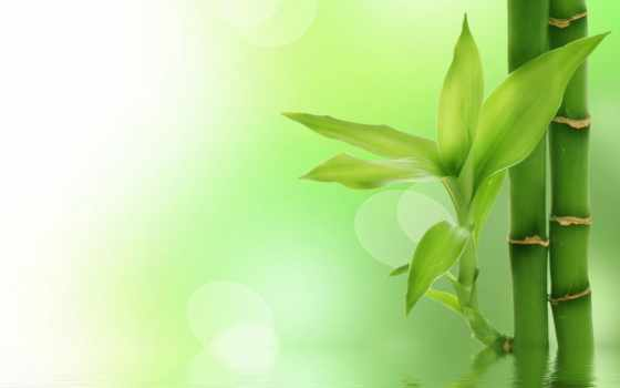 fondo, verde, fondos, pantalla, bambù, blanco, hojas, paisaje, naturaleza,