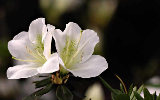 Цветы 2256