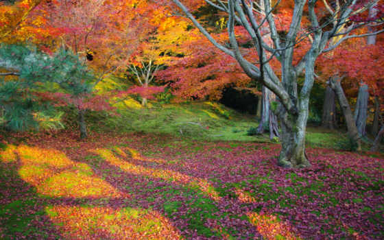 осень, природа, листья Фон № 102883 разрешение 2560x1600