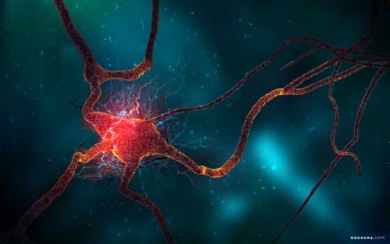 нейрон, high, this