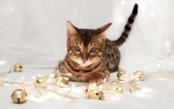 кот, бенгальская, кошки, елочных, игрушек, лежит, породы, кошек, бенгальской, бенгальский,