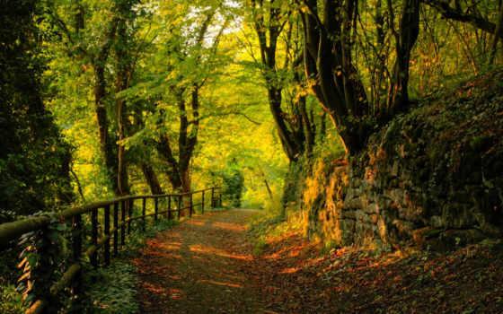 красивые, природа, парке, осеннем, осенние, природы, фотографий, осень, park, весна, summer,