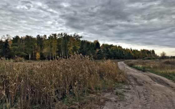 поле, дорога, фотографий, дек, цветы,