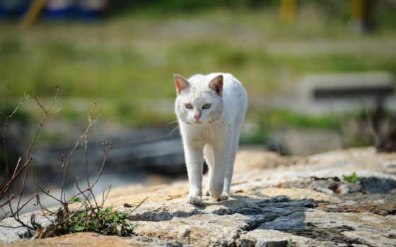 gato, blanco, голова, gatos, publicado, hace, años, que, con,