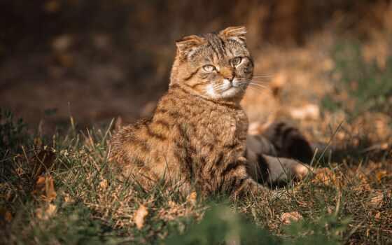 кот, blurry, best, smartphone, mac, трава, свободно, cute, осень, уж, explore