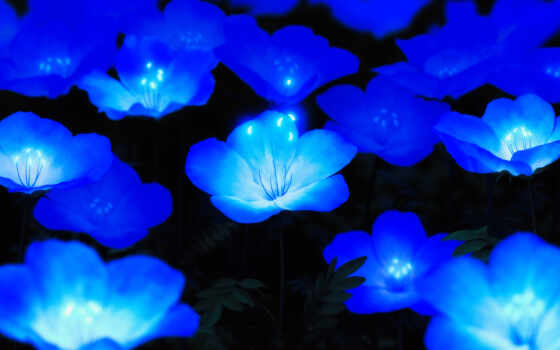 blue, cvety, цветы, который, любой, bloom