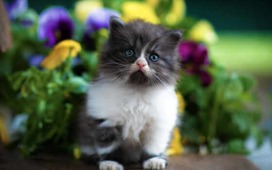 little, лапа, кот, postcard, взгляд, cute, wish, глаз, котенок