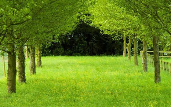 зелёный, трава, trees