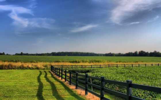 agriculture, забор, поле, сельское, поля, взгляд, зелёный,