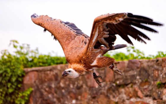 широкоформатные, перья, птица