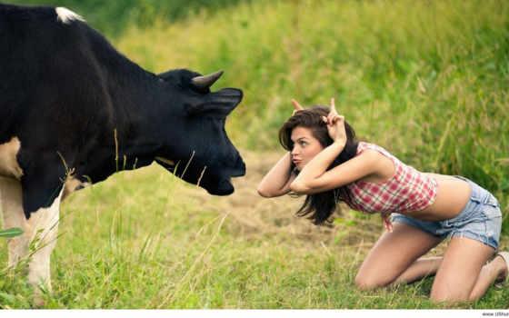 desktop, slike, krave
