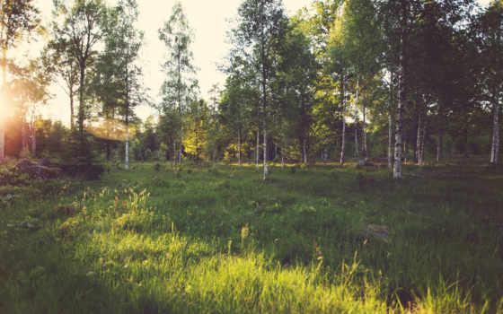 лес, landscape, sunlight, desktop, trees, mac, ск, город, зелёный,