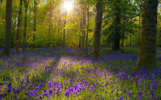 поляна, цветочная, лесу, деревьев, между, sun, проглядывает,