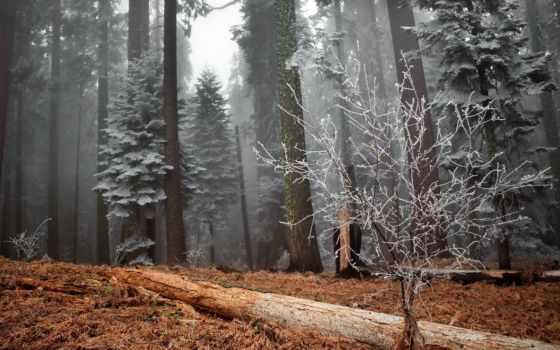 landscape, красивые, иней, trees, winter, пейзажи -, качестве, природа, хорошем, collector,