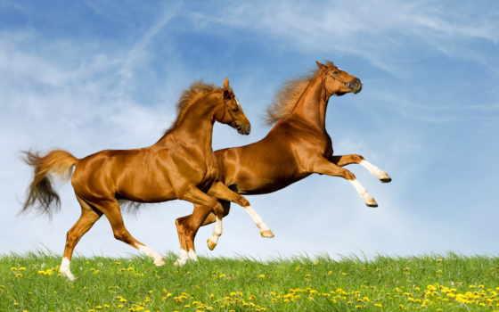 summer, природа, зелёный, летние, лошади, красивые,