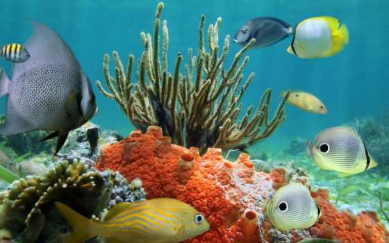 underwater, coral, world, риф, ocean, tropical, рыбки, фотообои,