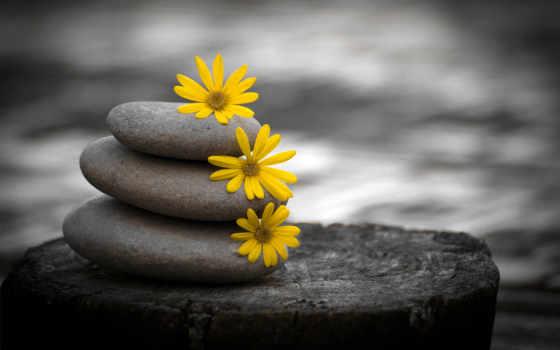 природа, white, black, камни, cvety,