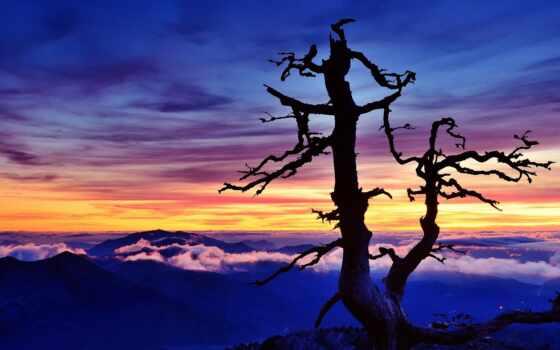 закат, landscape, облако, дерево