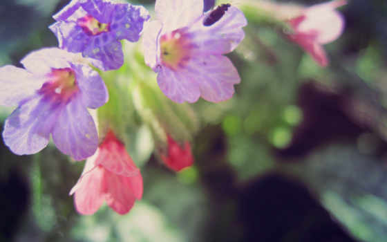 Цветы 37358