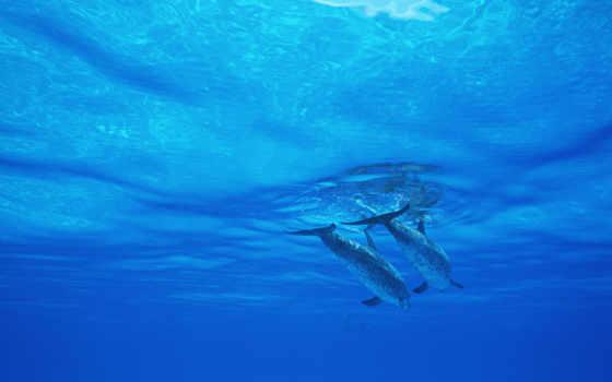 дельфины, zhivotnye, категория