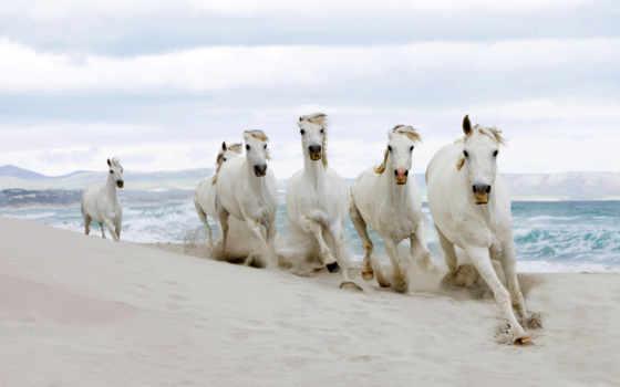 лошади, табун, кони