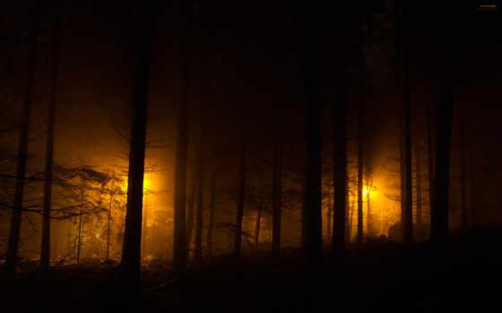 фонари, огни, ночные, ночь, вечер, лес, парке, ночном,