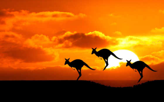 kangaroo, австралия, австралии, sun, силуэты,
