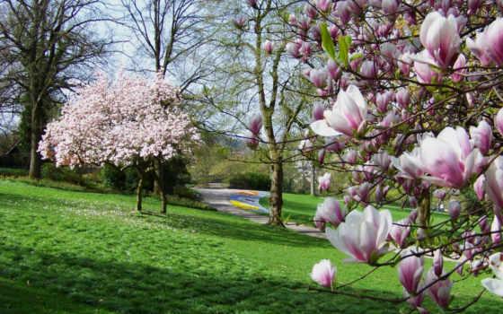 trees, park, desktop, трава, mobile, зелёный, flowers,