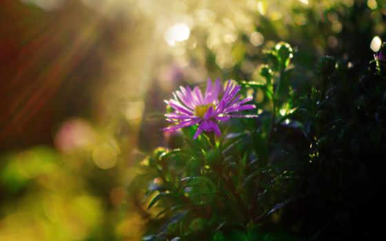 sun, cvety, kenny, rays, цветы, блики,