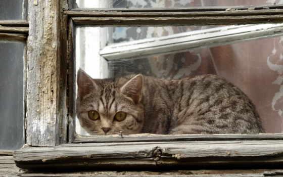кот, рама, кошки