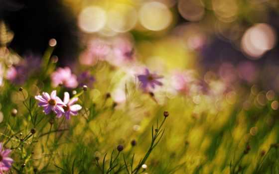 боке, effect, цветы