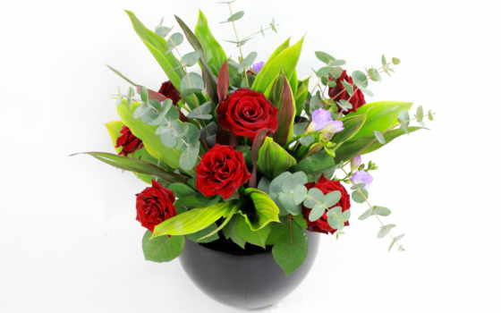 цветы, заставки, фотографии