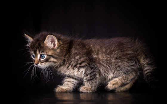животные, bell, cats