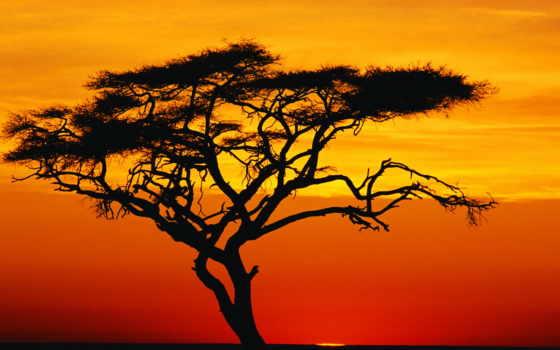 african, закате, acacia, zhivotnye, природа, силуэт, тегом,