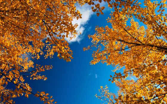 осень, золотая, ветки, листва, небо, природа,