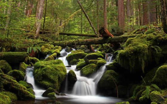 floresta, cachoeira, pedras, musgo, parede, natureza, árvores, tijuca, papel,