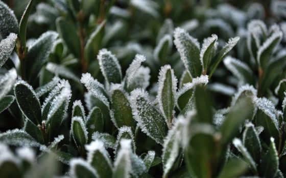 иней, трава, снег, макро, листва,