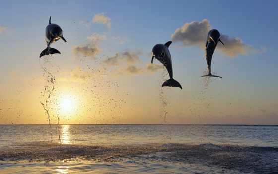 море, дельфины, rising, затоке, сегодня, get,