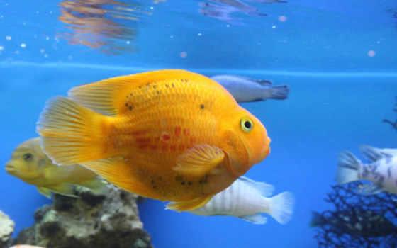 аквариуме, за, рыбки, рыбками, если, аквариумные, waters, рыб, fish,