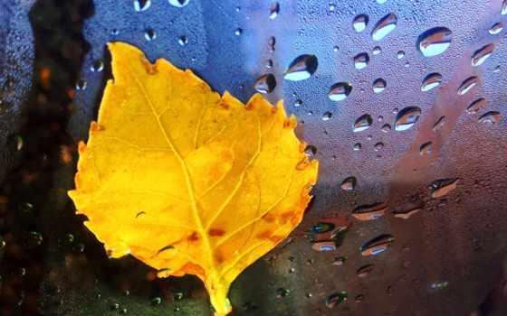 осень, макро, березового, осеннего, листка, иней,