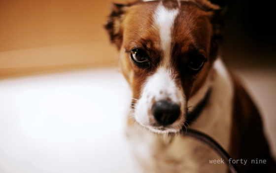 собака, фотообоев, чудесных