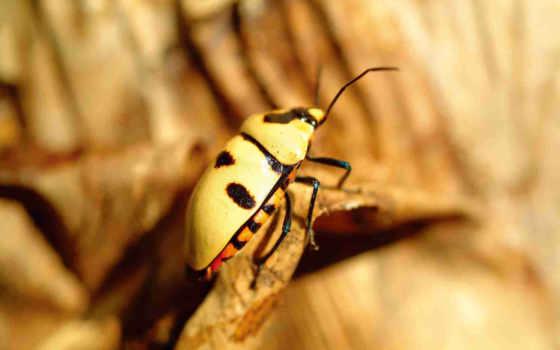 quebra, escarabajo, pantalla