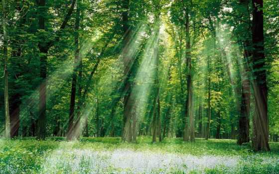 деревья, деревьев, растительность
