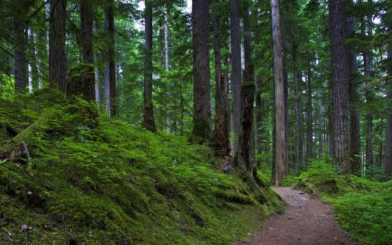 widescreen, free, лес