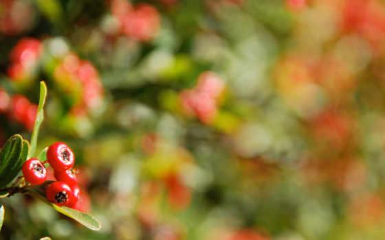 макро, ягоды, блики