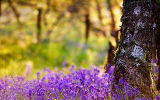 красивые, пейзажи -, лесов, природы, ipad, качестве, лес, красивый, весна,