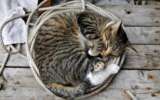 кошку, кот, сам, женю, спит, кошки, ногах, ночью, причин, перетягивает, exchange,