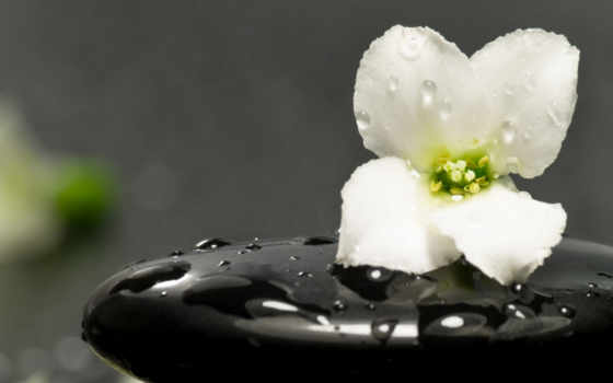 свежесть, цветы, капли, cvety, plan, большой, камень, zen, листва,