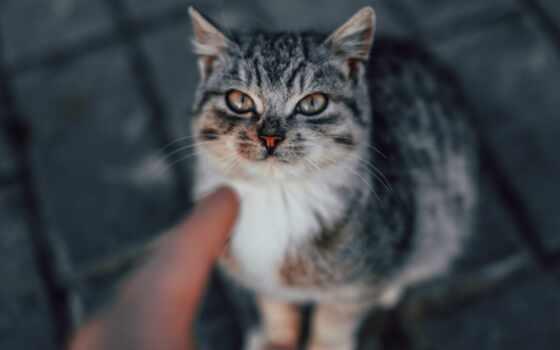 кот, white, браун, tabby, зелёный, arm, трава, глаз