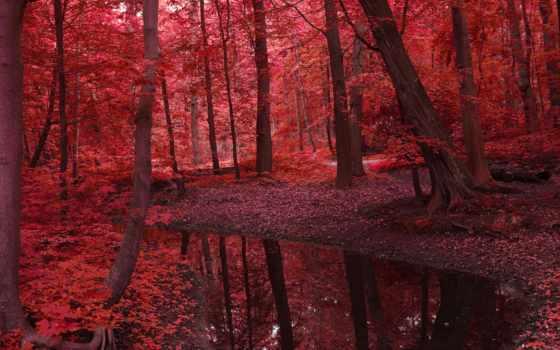 листья, деревья, лес